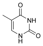Thymine chemical structure.png