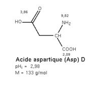 Acide aspartique
