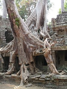 Tree intertwining with temple.jpg