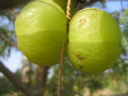 Fruits d'Amla