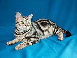 Jewelkatz Romeo Of Stalker-Bars.jpg