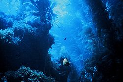 Kelp forest-blue.jpg