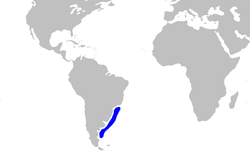 Squatina argentina distmap.png