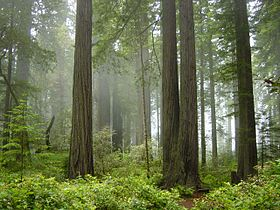 Image illustrative de l'article Parc national de Redwood
