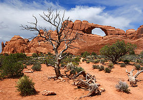 Image illustrative de l'article Parc national des Arches