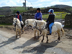 Welsh Mountain Ponies.jpg