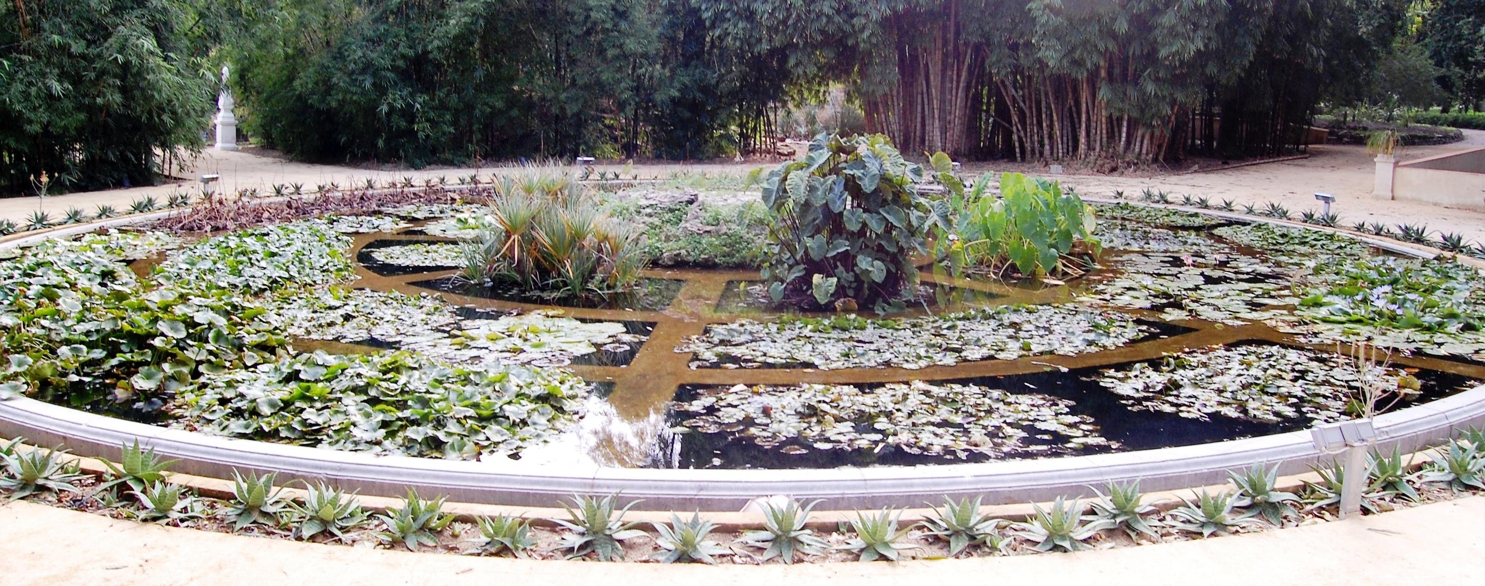 Jardin botanique de palerme for Amapola jardin de infantes palermo