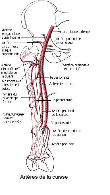 Les pieds de la maladie lié aux veines