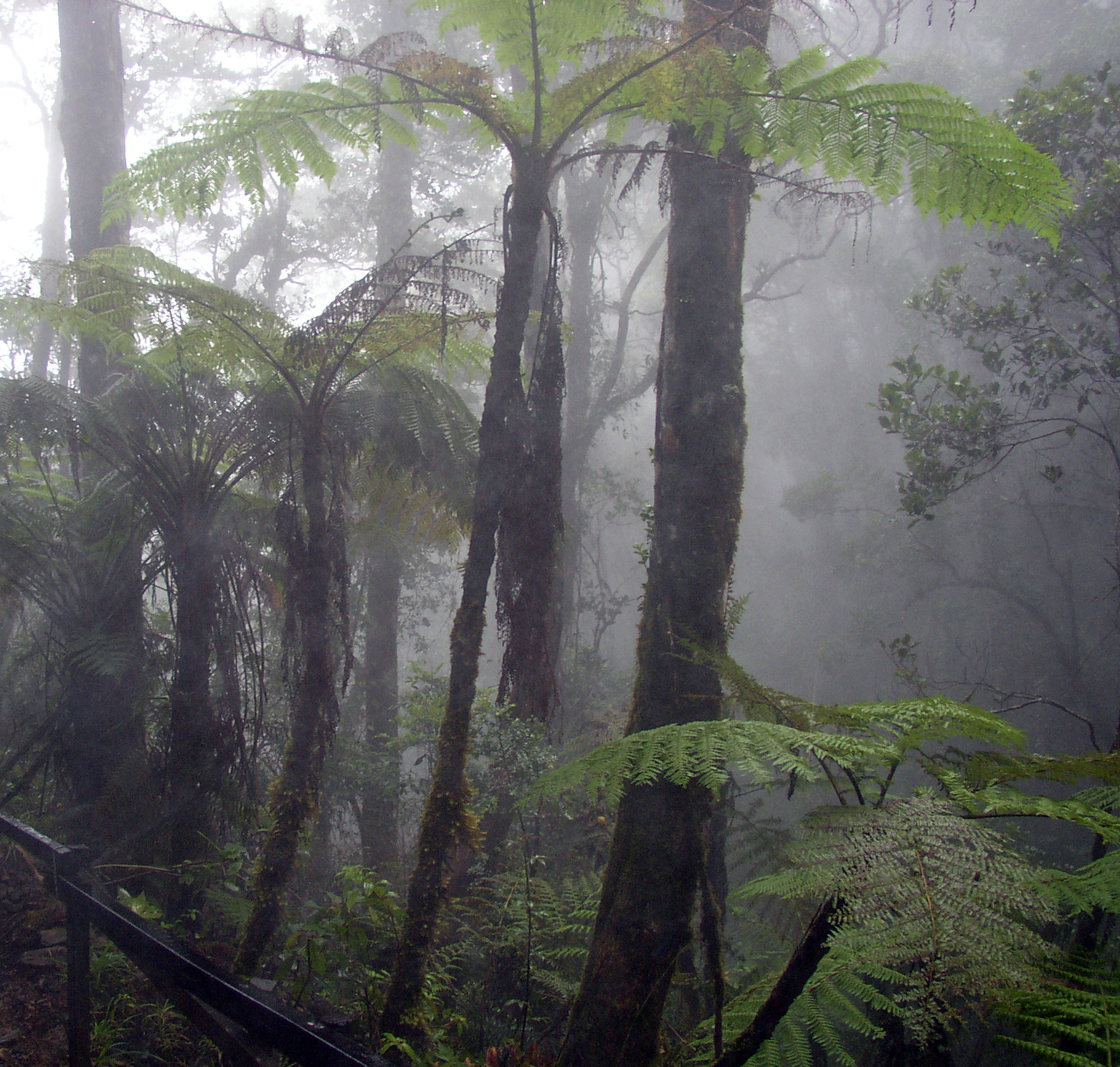 http://fr.academic.ru/pictures/frwiki/67/Cloud_forest_mount_kinabalu.jpg