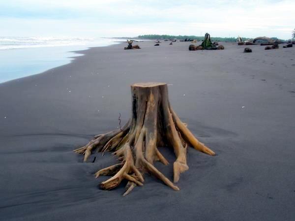 Lutte contre le bois illégal: la loi européenne qui va assainir la filière ?