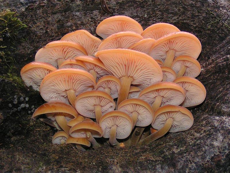Сентябрь грибной сезон в разгаре
