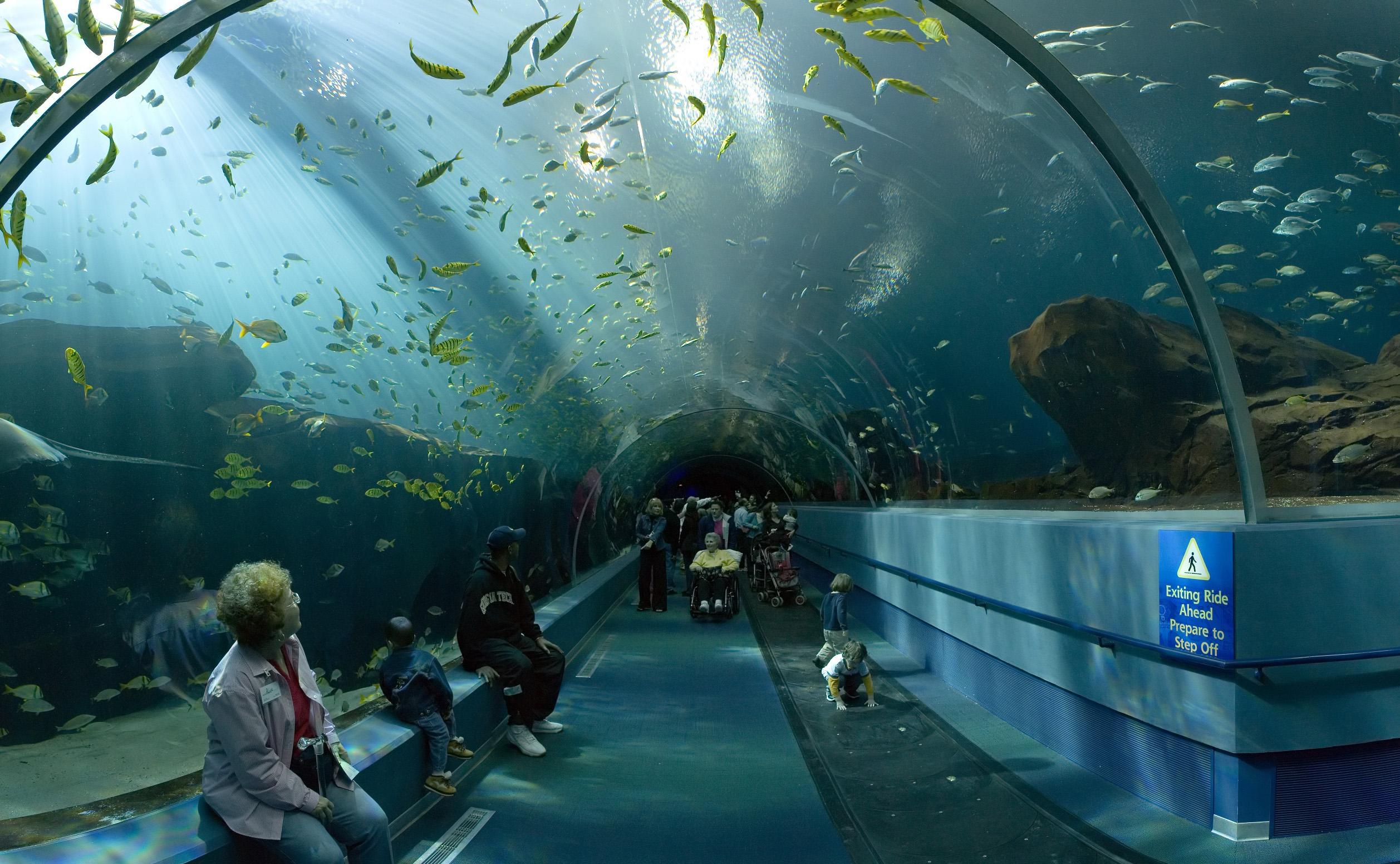 Aquarium De Georgie
