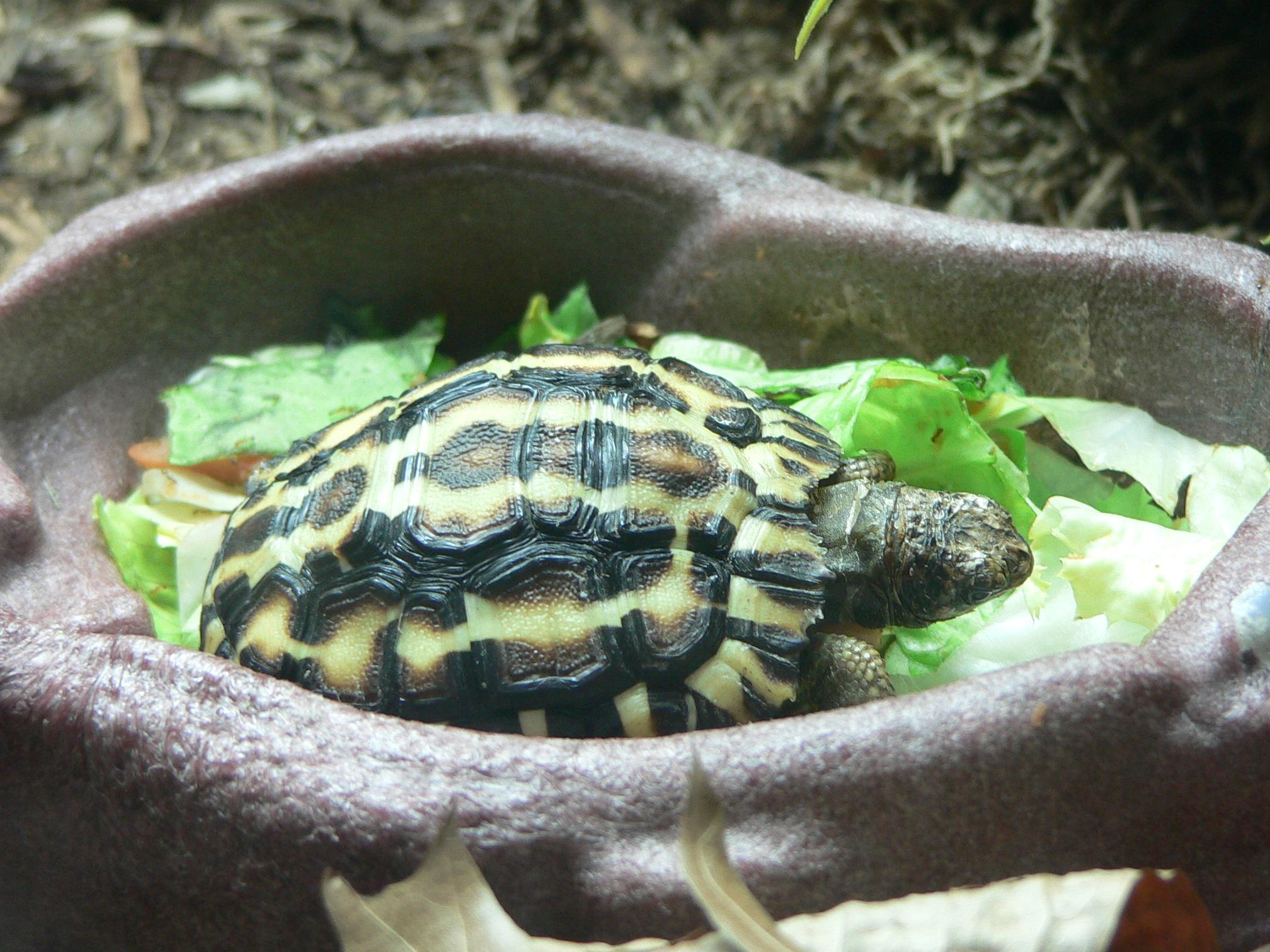 Что едят черепахи из домашних условиях