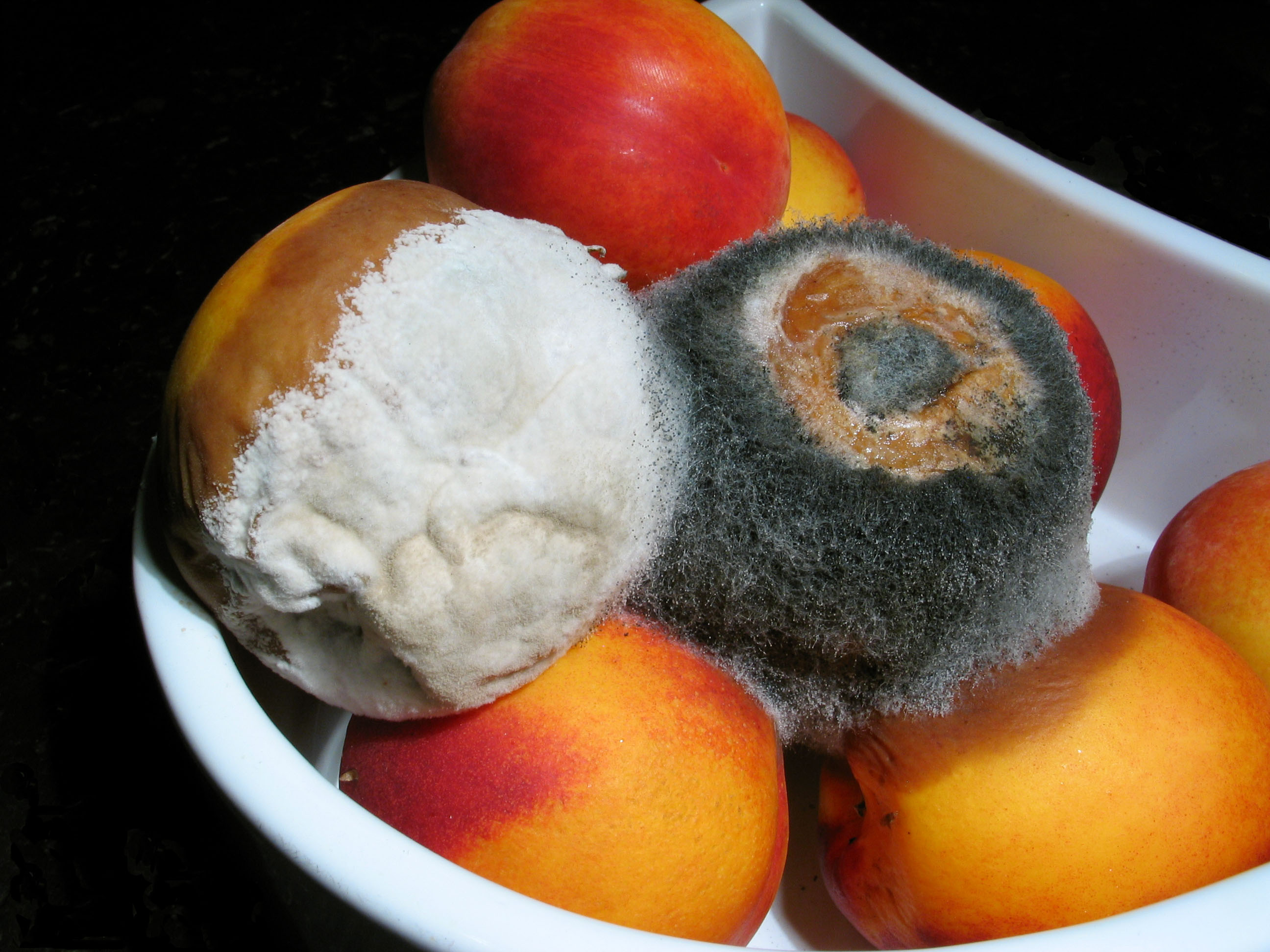http://fr.academic.ru/pictures/frwiki/77/Moldy_nectarines.jpg