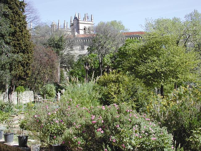 Jardin des plantes de montpellier - College du jardin des plantes ...