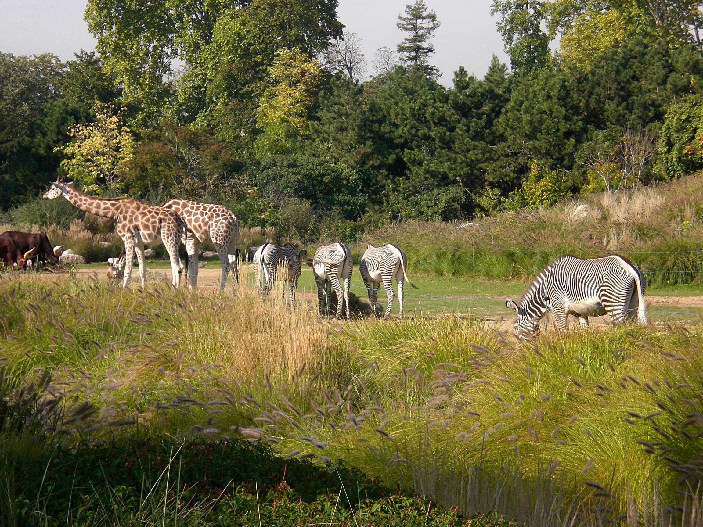 Jardin zoologique de la ville de lyon for Jardin zoologique de lyon