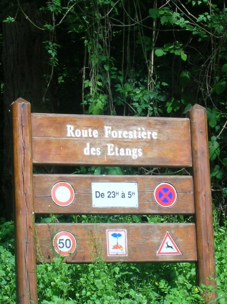Tangs de commelle for Poisson coye