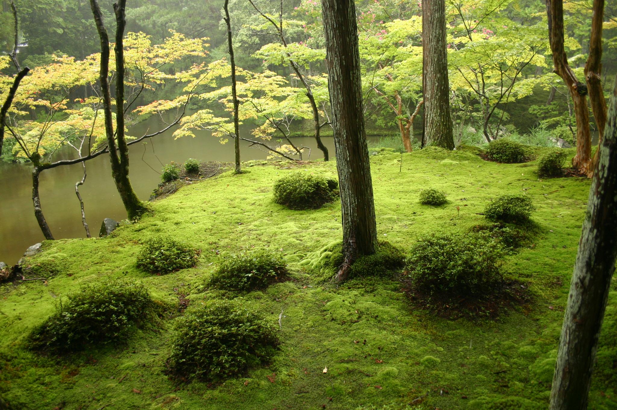 Jardin japonais for Jardin unesco
