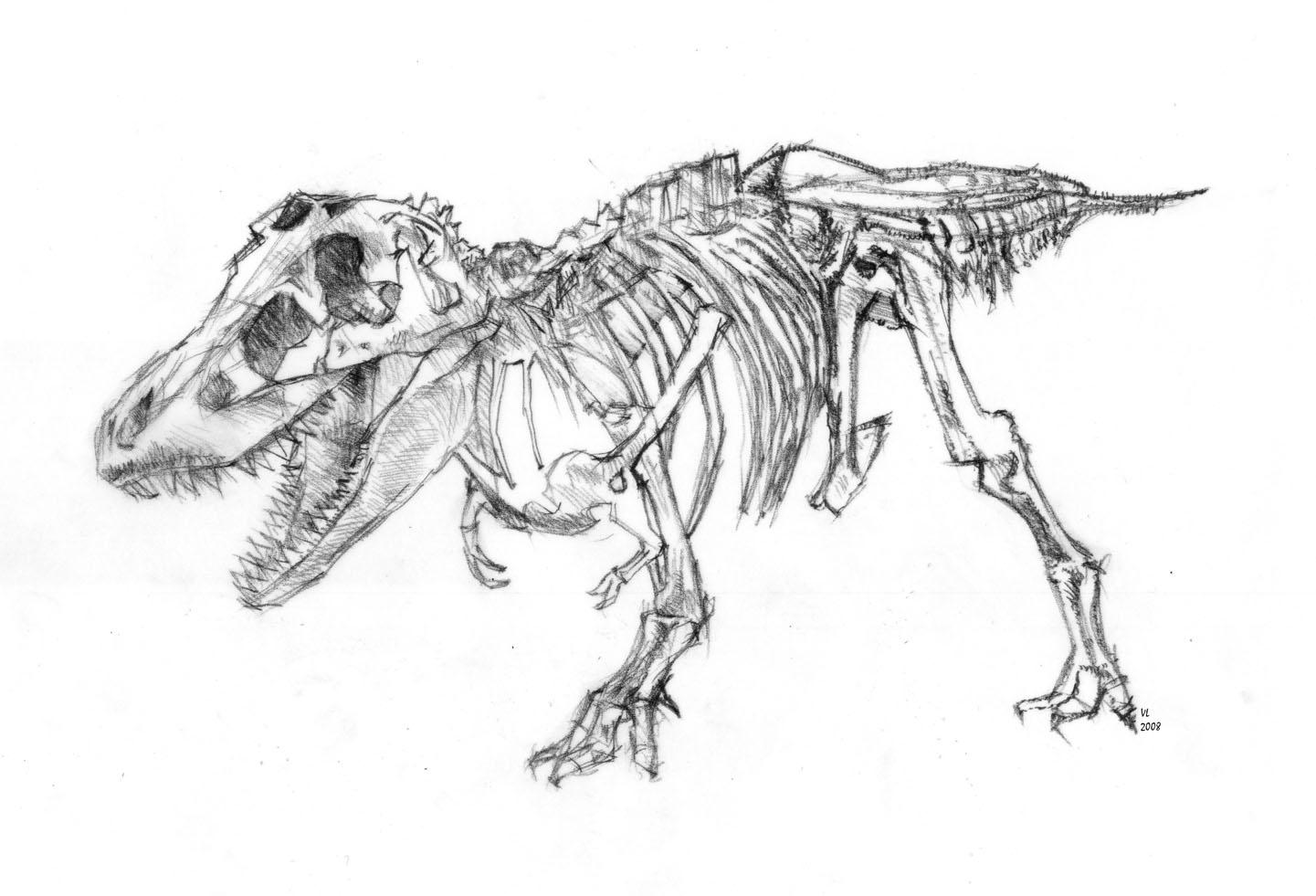 Jenghizkhan - Dessin de tyrannosaure ...
