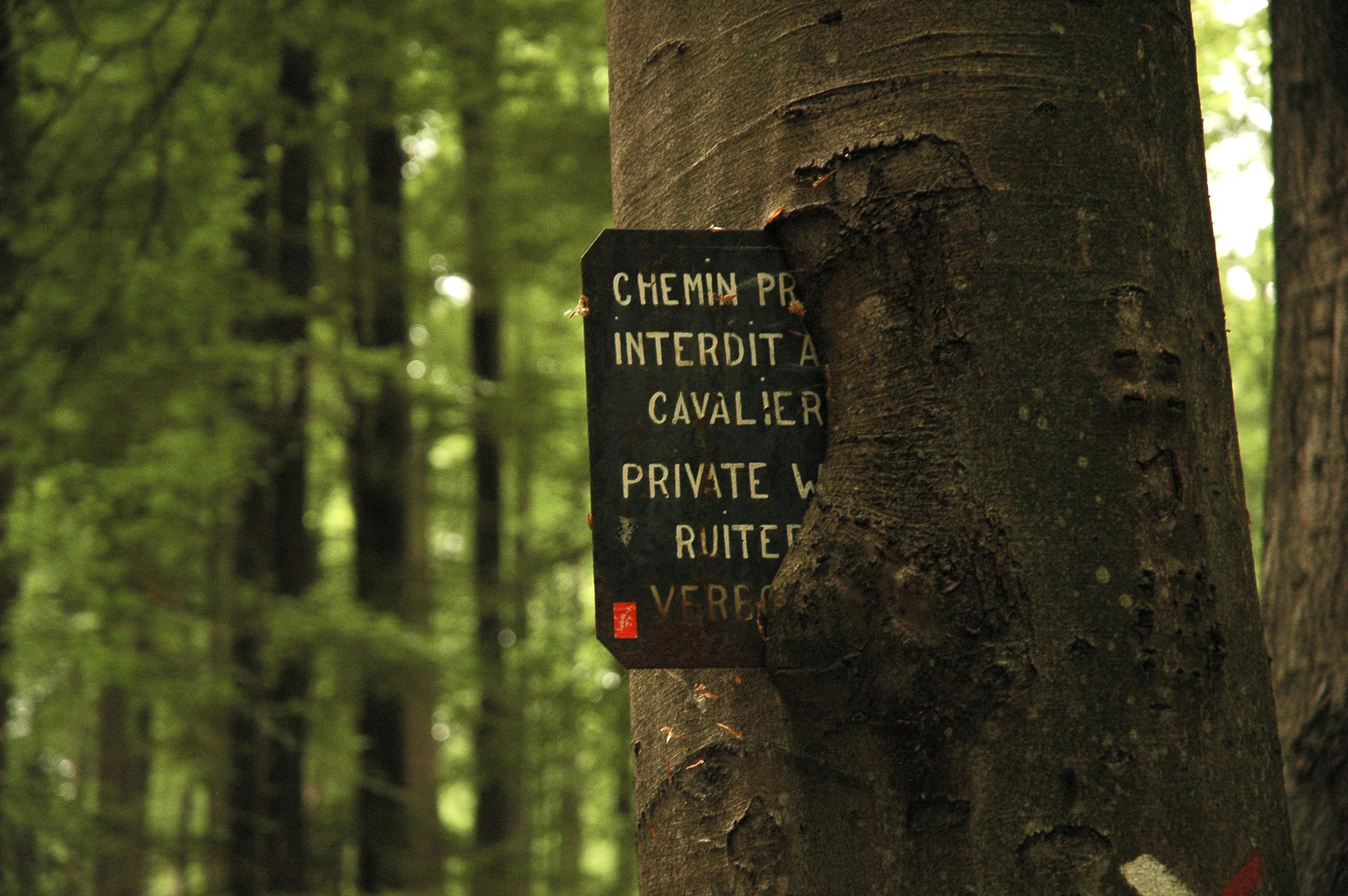 Tronc botanique for Maison en tronc d arbre