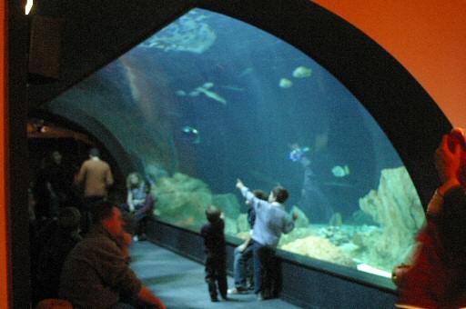 Aquarium cin aqua - Aquarium de paris jardin du trocadero ...