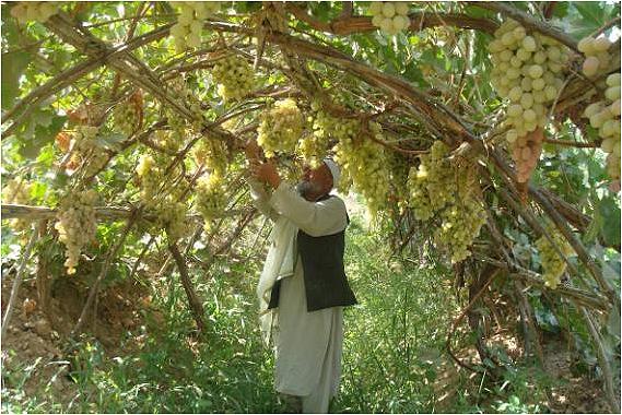 Liste de r gions viticoles - Planter vigne raisin de table ...