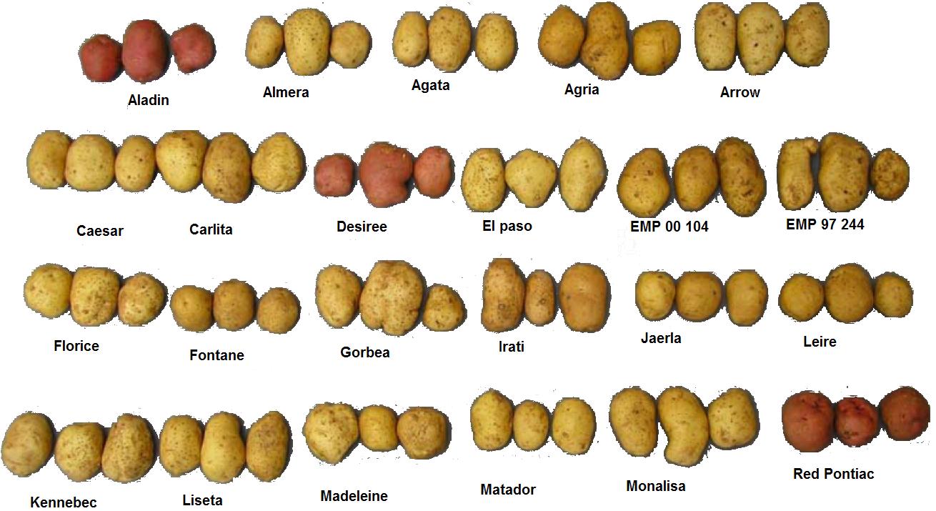 Vari t de pomme de terre - Tableau pomme de terre varietes ...