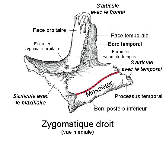 Os de la joue